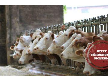 Futtermischwägen als zentrales Element der Milchgewinnung