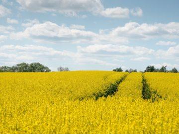 Bioenergie und Klimaschutz: das sind die Förderschwerpunkte