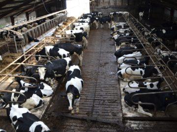 Tierwohl contra Massentierhaltung